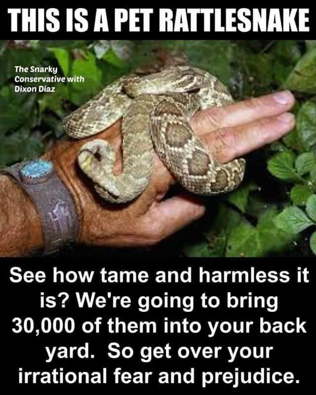 pet rattlesnake.jpg